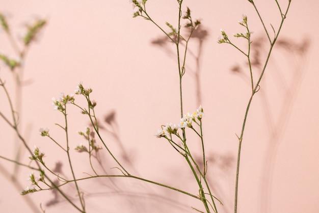 あなたのデザインのためのコピースペースとピンクの背景にカスミソウの花の小さな白い花の詳細...