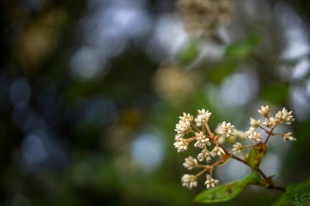 Little white flowers in the rain forest. nature background.