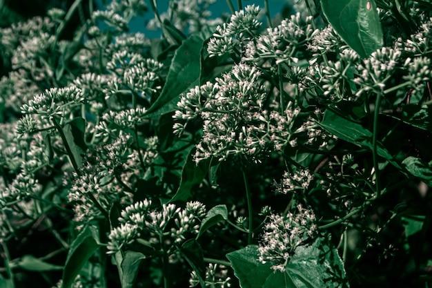 小さな白い草の花春の自然の壁紙の背景