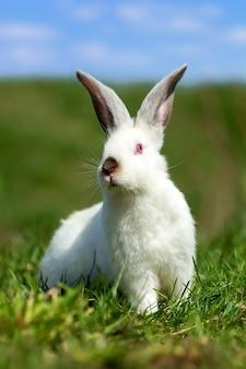 夏の日の緑の草の上の小さな白いウサギ