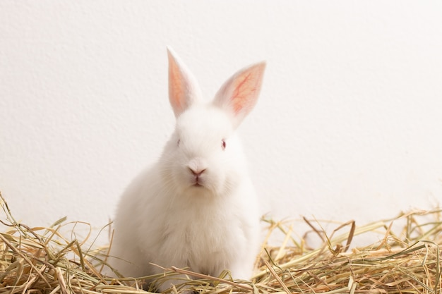 Little white rabbit sitting on straw nest with congrete background