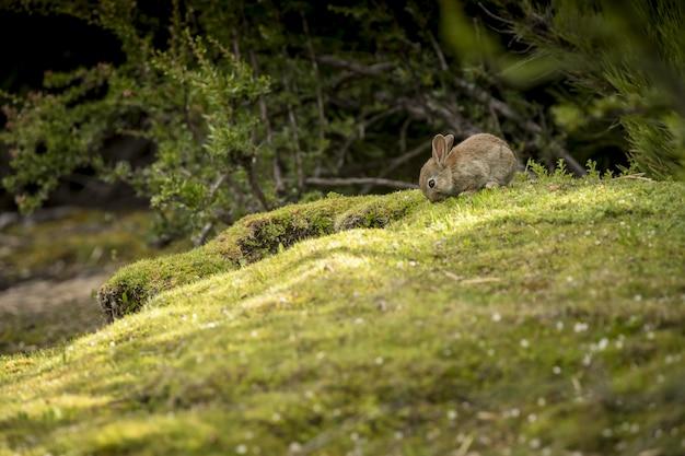 Маленький дикий кролик выходит из кустов в лесу