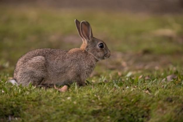 Маленький дикий кролик в лесу