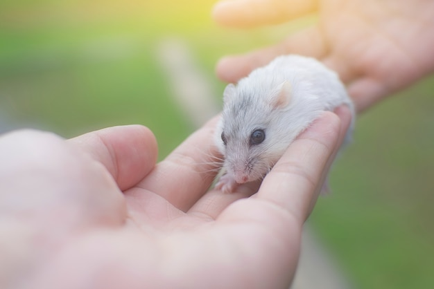 Little winter white hamster sleep on hand