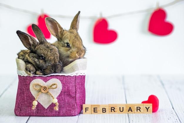 赤いハートのバスケットにバニーを住まわせます。バレンタインデーに動物と一緒にカード。
