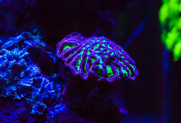 Live corals in a large marine aquarium
