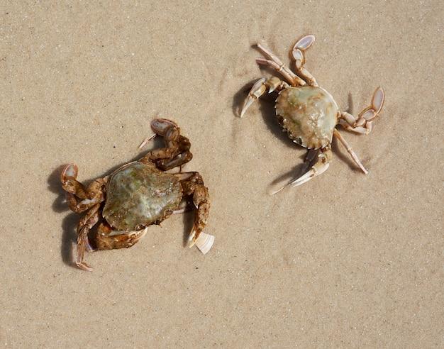 흑해의 모래 사장, 평면도, 우크라이나에 살아있는 게