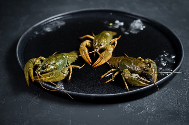 Live crayfish run away from the ice plate.