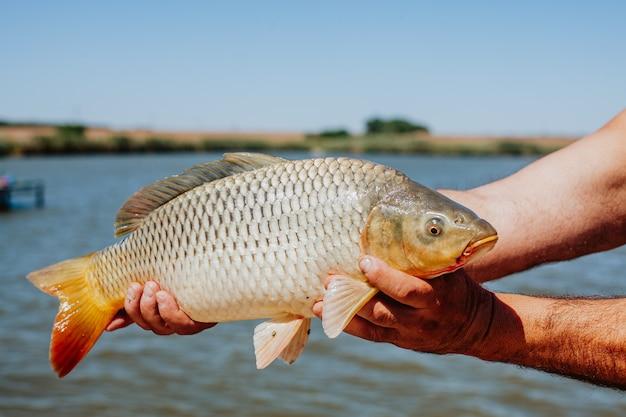 川の背景に男の手で生きている魚