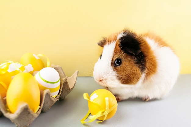 Live guinea pig with decorated easter eggs