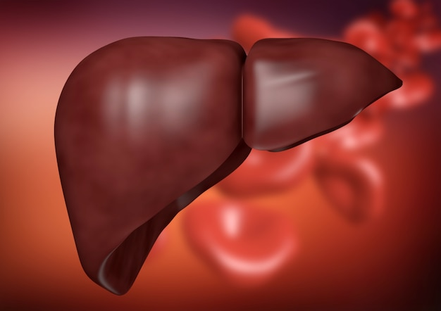 Liver on organic background