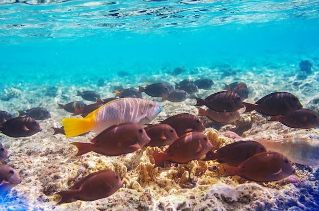 이집트 홍해의 살아있는 산호초.