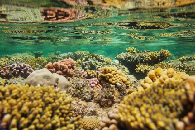 Living coral reef in red sea, egypt.