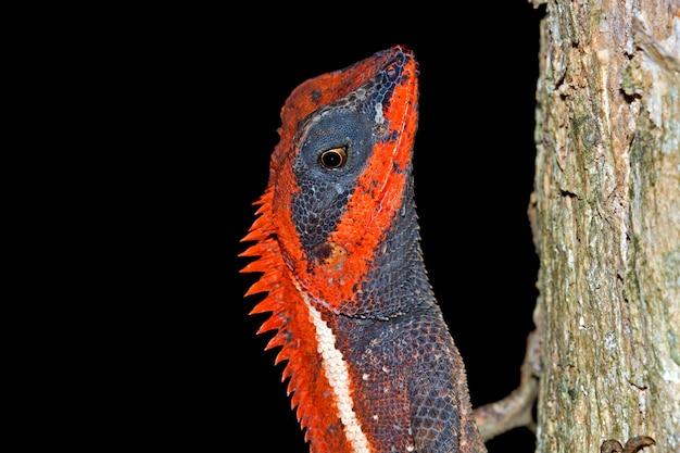 Lizard on a branch nature