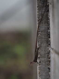 A lizard on cement wall looking down for somthing to eat
