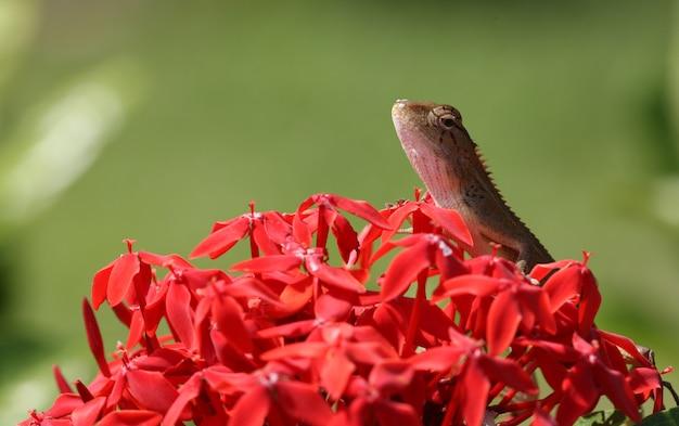 Lizard outdoors on petals
