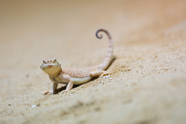 Lizard reptile animal and gecko