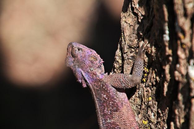 Lizard on a safari in africa