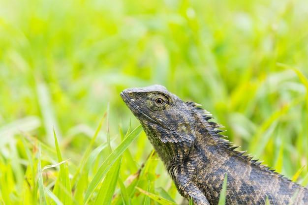 Lizard sitting on grass