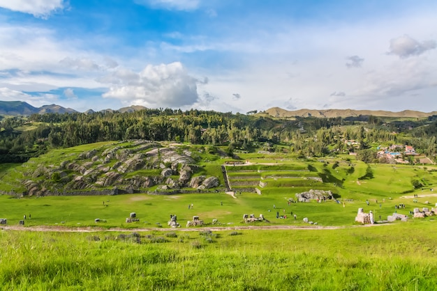 Llamas and alpacas at sacsayhuaman, incas ruins in the peruvian andes, cusco, peru