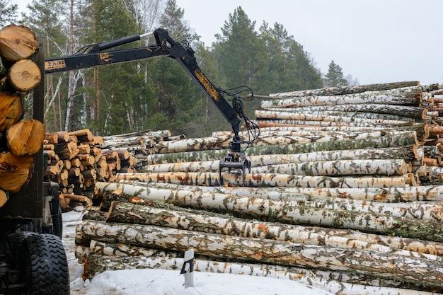 자작나무 통나무를 특수 차량에 싣고 있습니다. 겨울에 목재를 수확합니다. 목재산업.