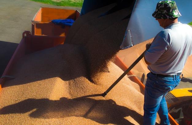 곡물을 트럭에 싣고 사람이 기계 본체의 곡물을 고르게 수평을 유지합니다.