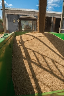 Loading of wheat corns
