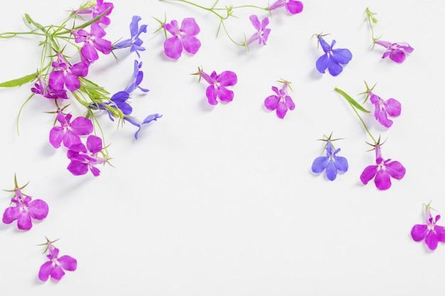 白い表面にロベリアの花