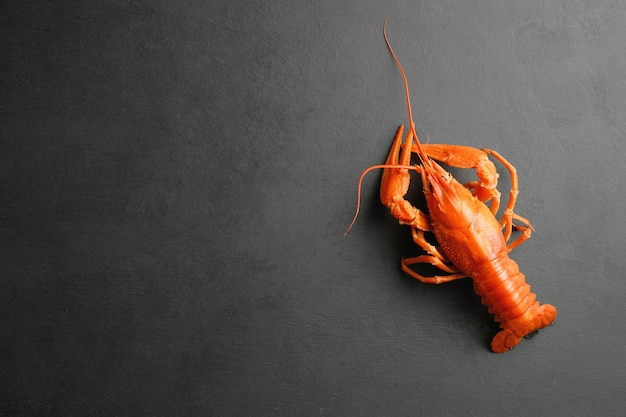 Lobster on black background top view