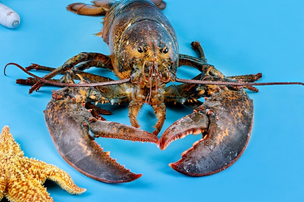 Lobster with starfish on blue surface