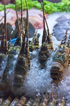 市場に展示されている氷の中のアカザエビ