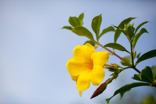 매우 화려하고 아름다운 현지 이국적인 꽃