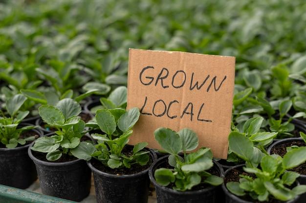 Local grown plants in pots