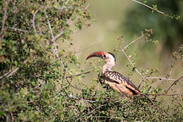 Local kenyan bird on the green bush
