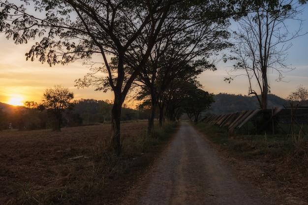 Местная дорога на ферме во время заката