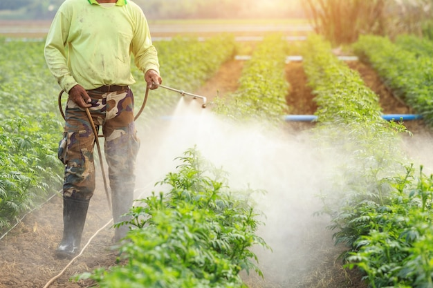Local thai farmer or gardener spraying chemical