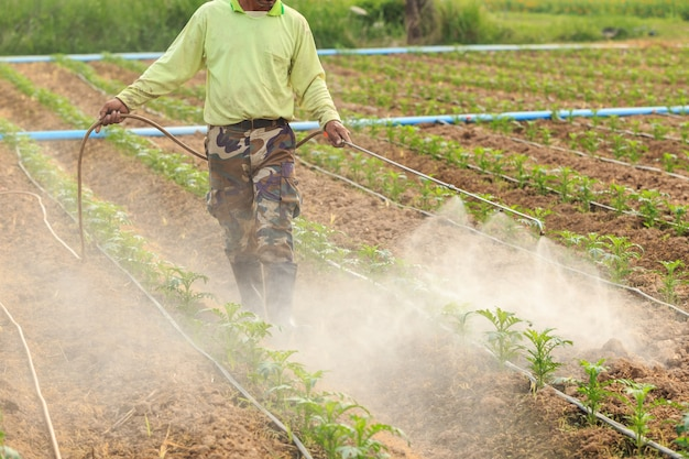 Local thai farmer or gardener spraying chemical