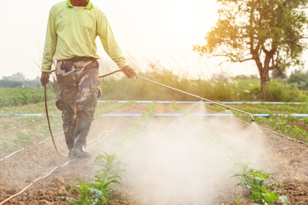 Local thai farmer or gardener spraying chemical in