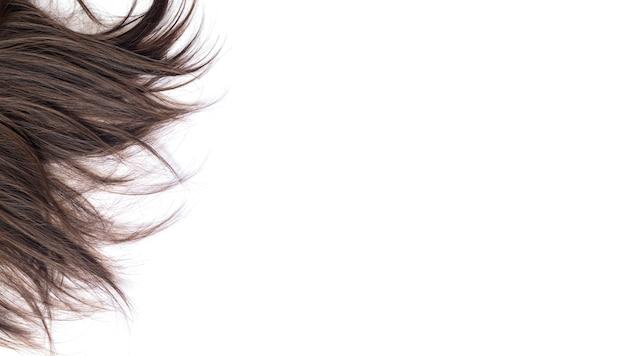 흰색 배경에 고립 된 어두운 갈색 머리 스트레이트 머리의 잠금. 머리 자르기, 스타일링, 관리 또는 확장 개념