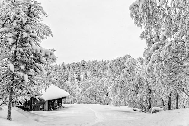나무와 눈 덮인 숲에 통나무 집