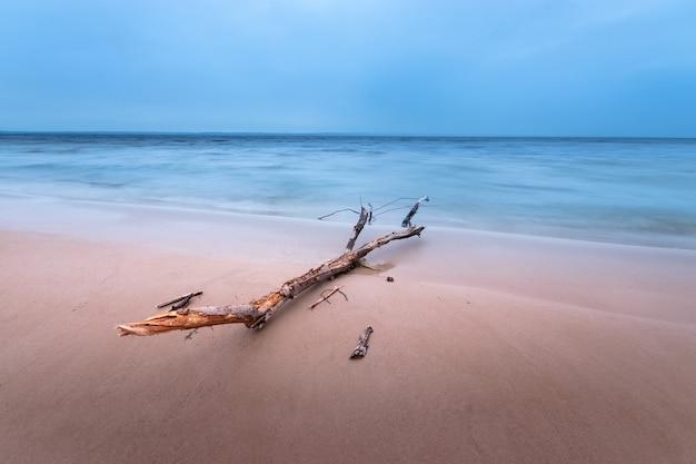 Бревно лежащее на берегу / рассвет на берегу ранней весной синих оттенков