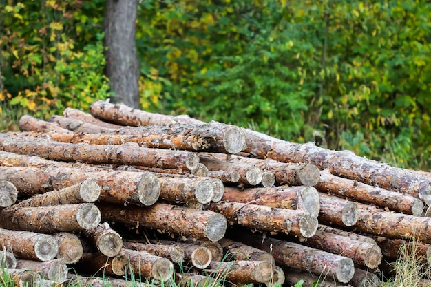 Log trunks pile the logging timber wood industry wooden trunks on autumn forest background