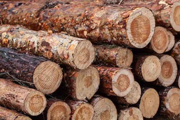 丸太の幹が山積みになり、伐採材の森林木材産業。森で収穫する木の幹のバナー。