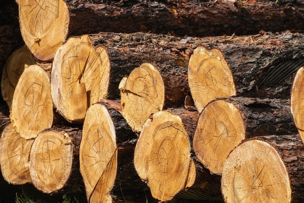 丸太の幹が山積みになり、伐採材の森林木材産業。森林での木材収穫