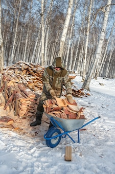 Logger saws a tree in the forest in winter for firewood