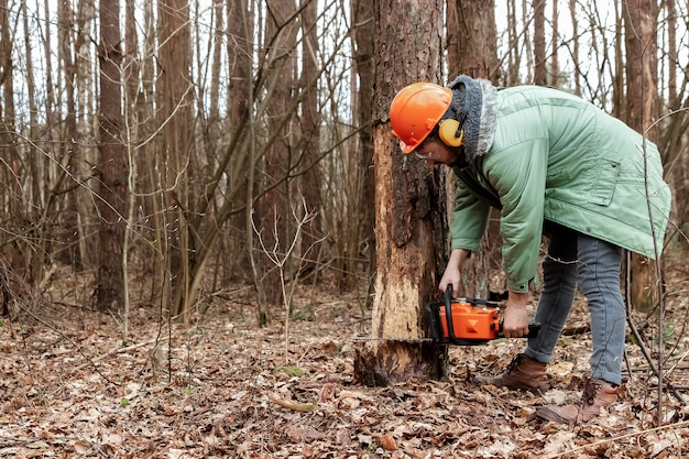 Logging, worker in a protective suit with a chainsaw sawing wood