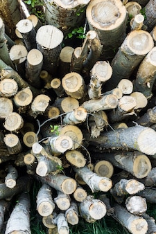 Logs for logging