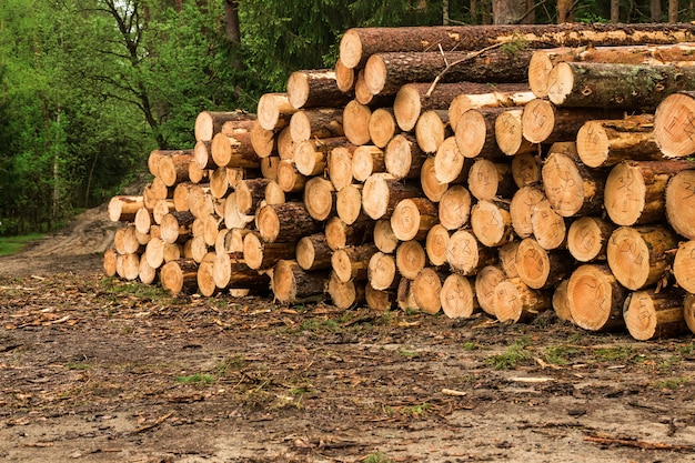 숲에 쌓여 있는 통나무. 신선한 로그. 숲의 솎아내기. 벌목 목재 산업.