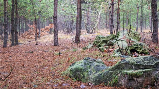 Бревна пень заросли мхом. хвойный сосновый молодой лес туманное утро вечнозеленые деревья природа прогулка.