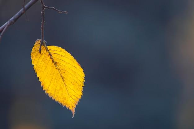 Одинокий осенний лист на дереве